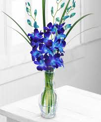 4 Blue orchids in a vase