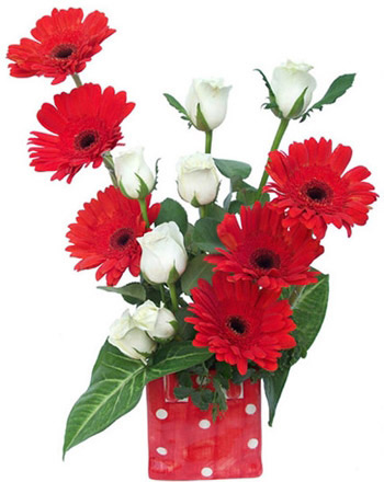 6 red gerbera +6White Roses Vase (Vase may differ)