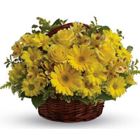 12 Yellow Gerbera 12 yellow roses short stem Arrangement