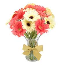 10 Pink white gerberas in a Vase