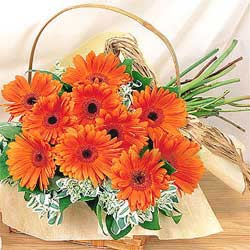12 Orange Gerberas Basket