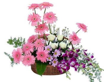 6 pink gerberas 4 purple orchids 6 white roses basket