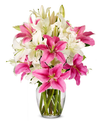 Pink and White Lilies in a vase